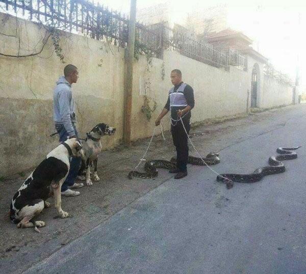 snake pet-walk