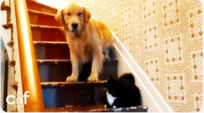 Dogs That Are Extremely Afraid Of Cats!