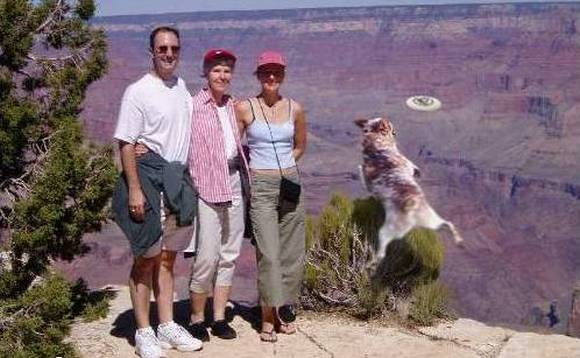 Dog's last jump