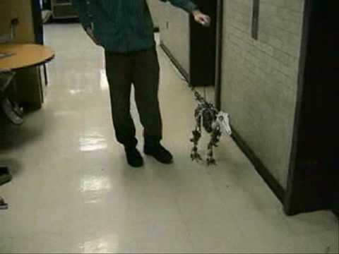 MIT's Robotic Legs And Creatures