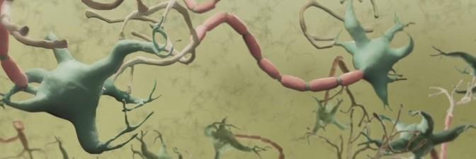 New Harvard University's Neuroscience Informative Animations (4 videos)