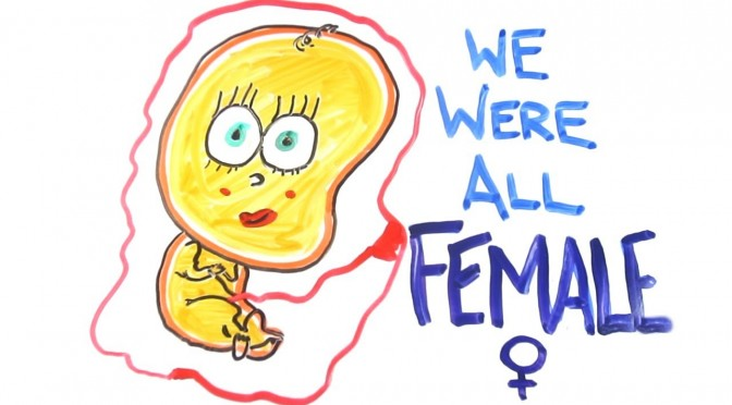 Science: We Were All Female Before Our Birth!