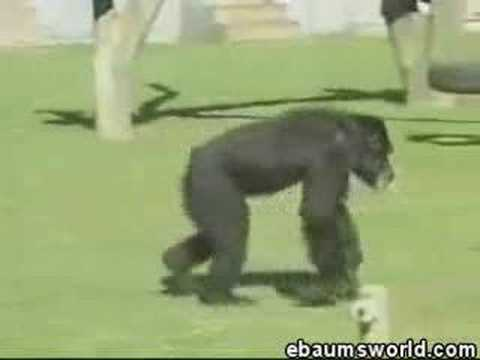 Real Footage Of A Monkey that Smokes