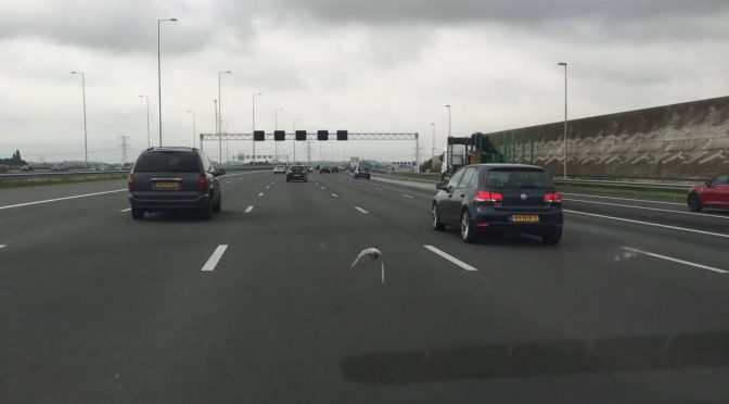 Pigeon Flies 100km/h Between Cars On a Highway