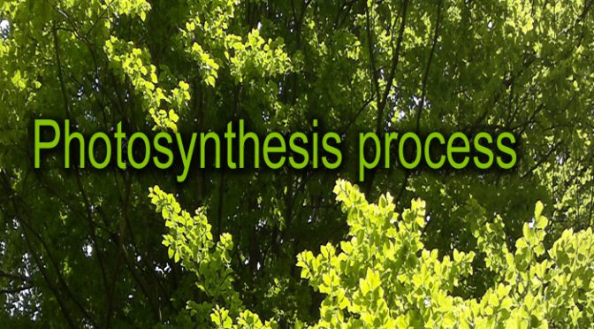 How Photosynthesis works in plants (+ an explanatory Video animation) – Photosynthesis process step by step