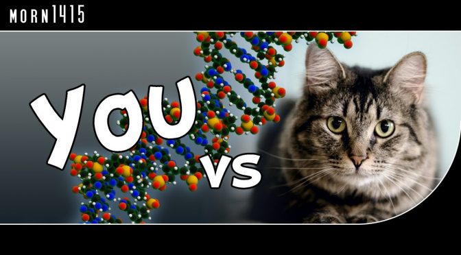 Visual comparison of Human DNA/Genome to other Animal & Plant genomes